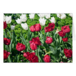 red white tulips greeting card