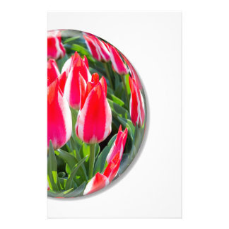 Red white tulips in glass sphere on white stationery