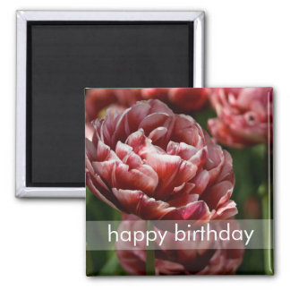 Red & White Variegated Tulip Macro DSC0802 2 Inch Square Magnet