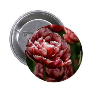 Red White Variegated Tulip Macro DSC0802 Pinback Buttons