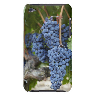 Red wine grapes on the vine barely there iPod cover