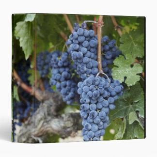 Red wine grapes on the vine vinyl binders