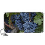 Red wine grapes on the vine iPod speakers
