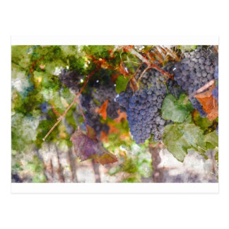 Red Wine Grapes on Vine Postcard