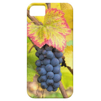Red Wine Grapes on Vine with Fall Season Foliage iPhone 5 Case
