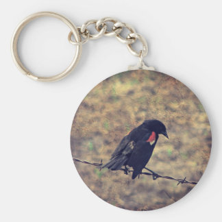 Red Wing Blackbird on Barbed Wire Key Chains