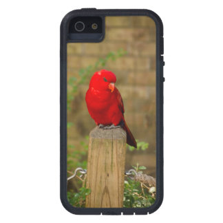 Red Wing iPhone 5 Case