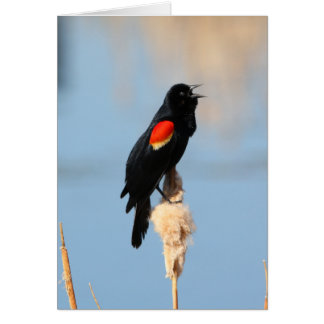 Red-winged Blackbird Card