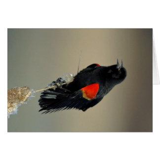 Red-winged Blackbird Card
