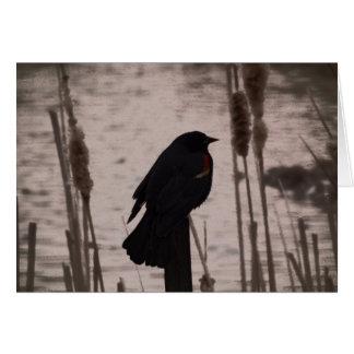 Red Winged Blackbird Card
