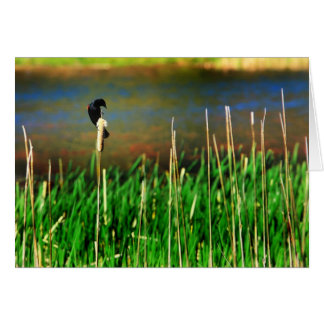 Red Winged Blackbird Cards