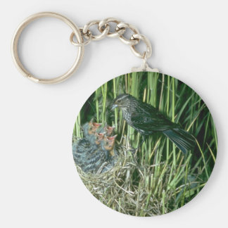 Red-winged Blackbird (female) with young Key Chain