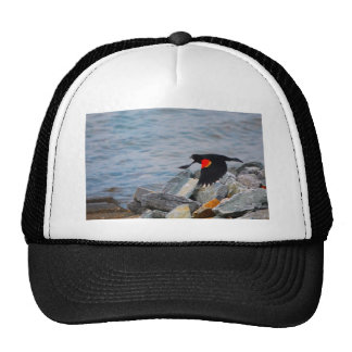 Red Winged Blackbird - hat