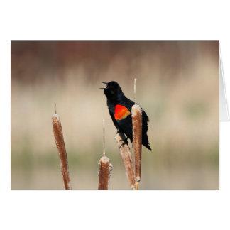 Red-winged Blackbird III Card