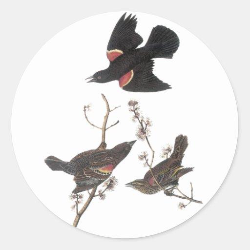 Red-Winged Blackbird, John Audubon Round Stickers