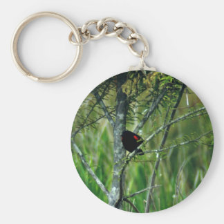 Red-winged Blackbird Key Chain