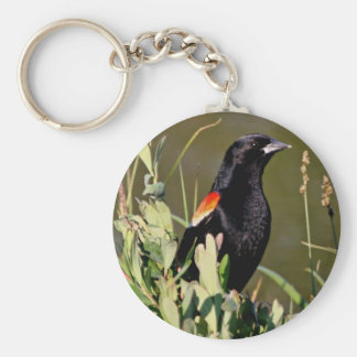 Red-winged Blackbird Key Chains