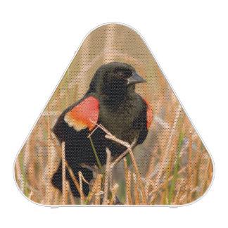 Red-winged Blackbird male singing Speaker