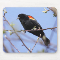 Red-winged Blackbird Mouse Pad