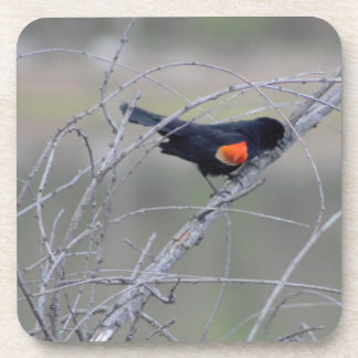 Red-winged Blackbird on a Branch Beverage Coaster
