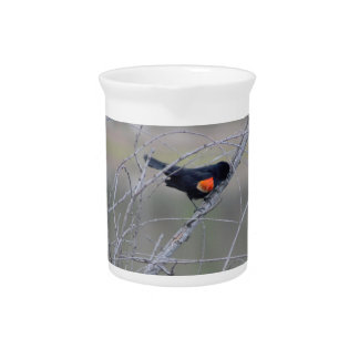 Red-winged Blackbird on a Branch Drink Pitchers