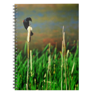 Red Winged Blackbird on a Cattail Notebook