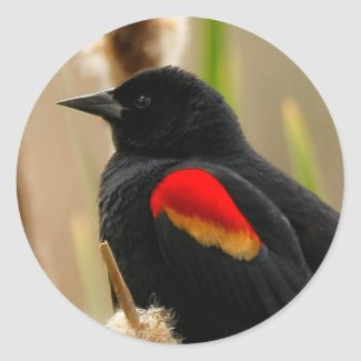 Red-Winged Blackbird on the Bulrush Classic Round Sticker