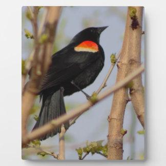 Red-winged Blackbird Plaque