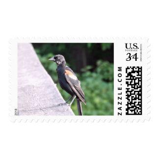 Red Winged Blackbird Postage