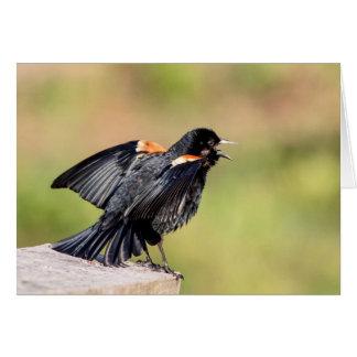 Red Winged Blackbird Singing Card