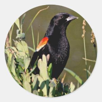 Red-winged Blackbird Stickers