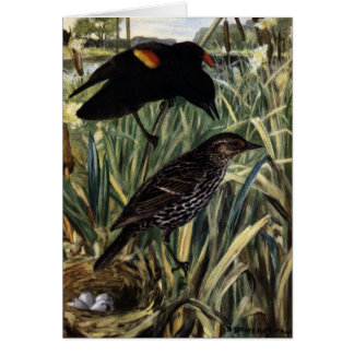 Red-Winged Blackbirds and Nest in Cattails Card