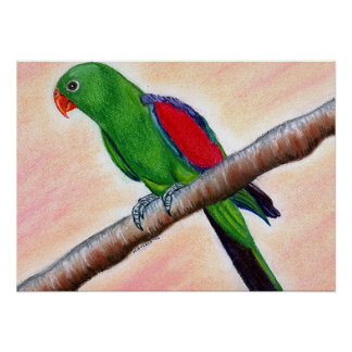Red Winged Parrot Bird Portrait Poster