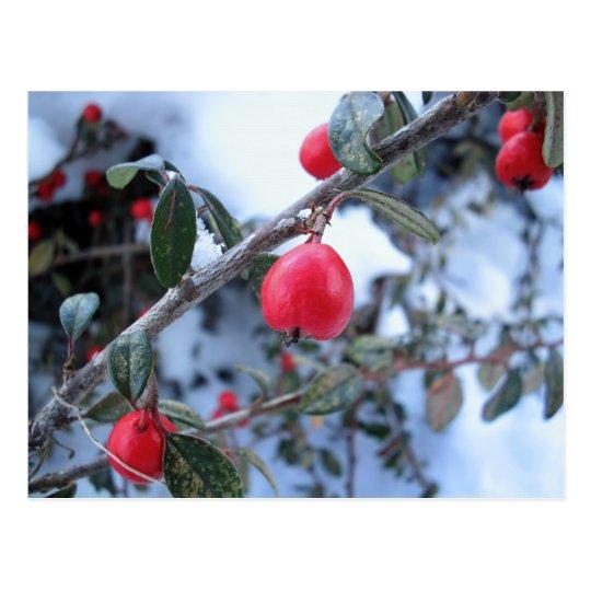 Red winter rosehip berries postcard
