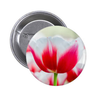 Red with white tulip in front of field button