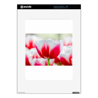 Red with white tulip in front of field iPad skins