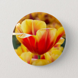 Red with yellow tulip in flowers field pinback button