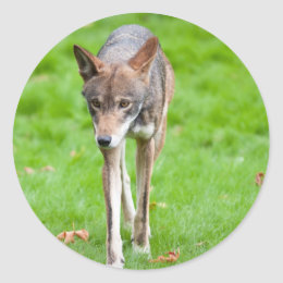 Red Wolf Classic Round Sticker