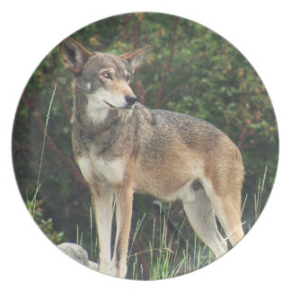Red Wolf Collectors Plate