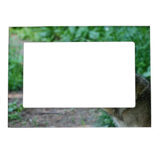 Red Wolf Photo Frame Magnet