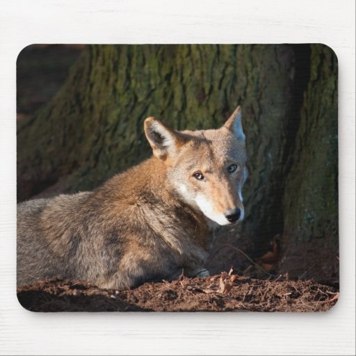 Red Wolf Mouse Pad