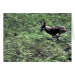 Red Wolf (running) Greeting Card