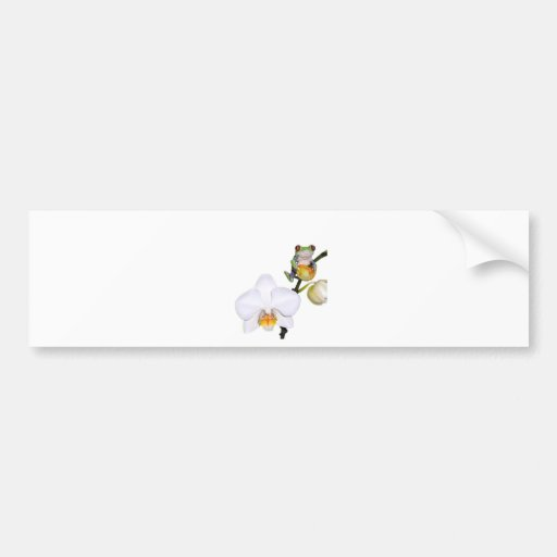 red yed tree frog on orchid bumper sticker