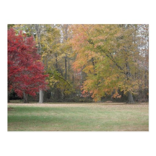 Red, Yellow, And Orange Leaves On The Trees With G Postcards