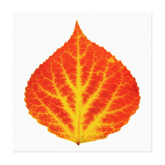 Red & Yellow Aspen Leaf #10 Canvas Print