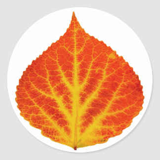 Red & Yellow Aspen Leaf #10 Classic Round Sticker