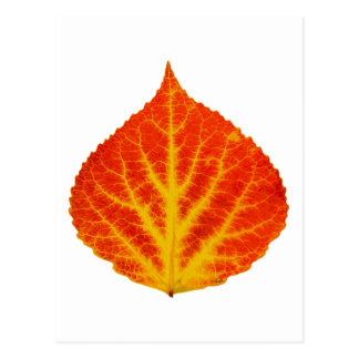 Red & Yellow Aspen Leaf #10 Postcard
