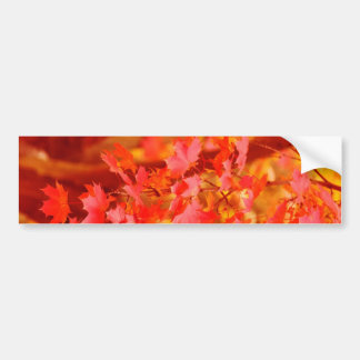 RED YELLOW AUTUMN LEAVES FALL MAPLE NATURE BEAUTY BUMPER STICKERS