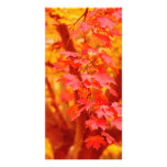 RED YELLOW AUTUMN LEAVES FALL MAPLE NATURE BEAUTY PHOTO CARD