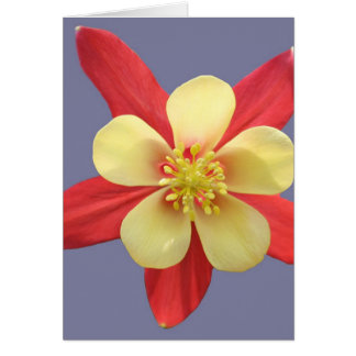 Red & Yellow Columbine Card